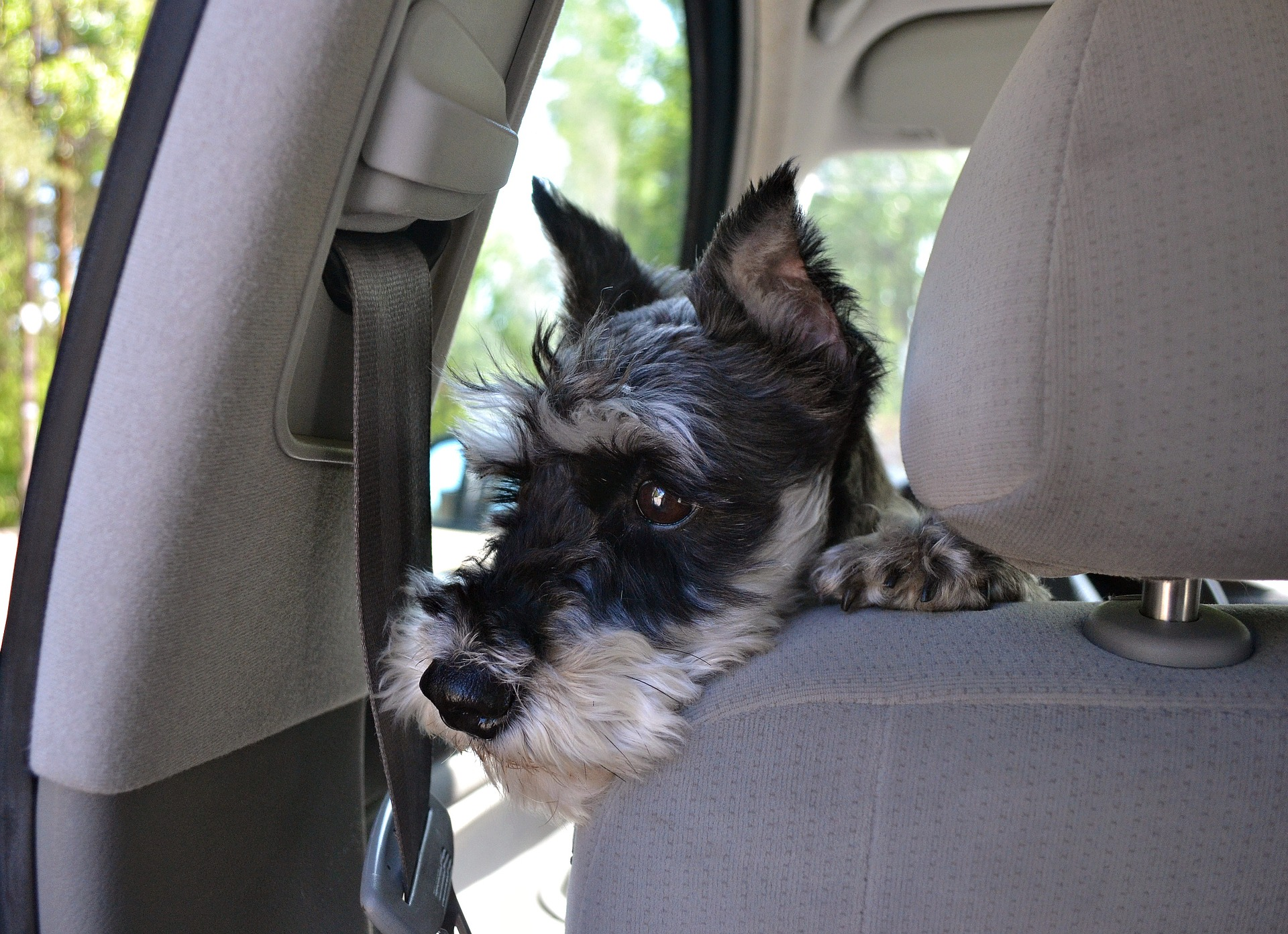 Везем питомцев на дачу: как правильно разместить домашних животных в авто?